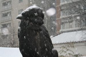浅草神社 巫女ブログ