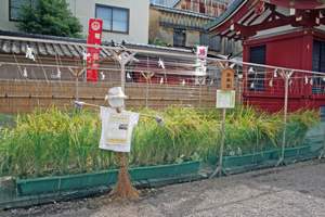 浅草神社 神田