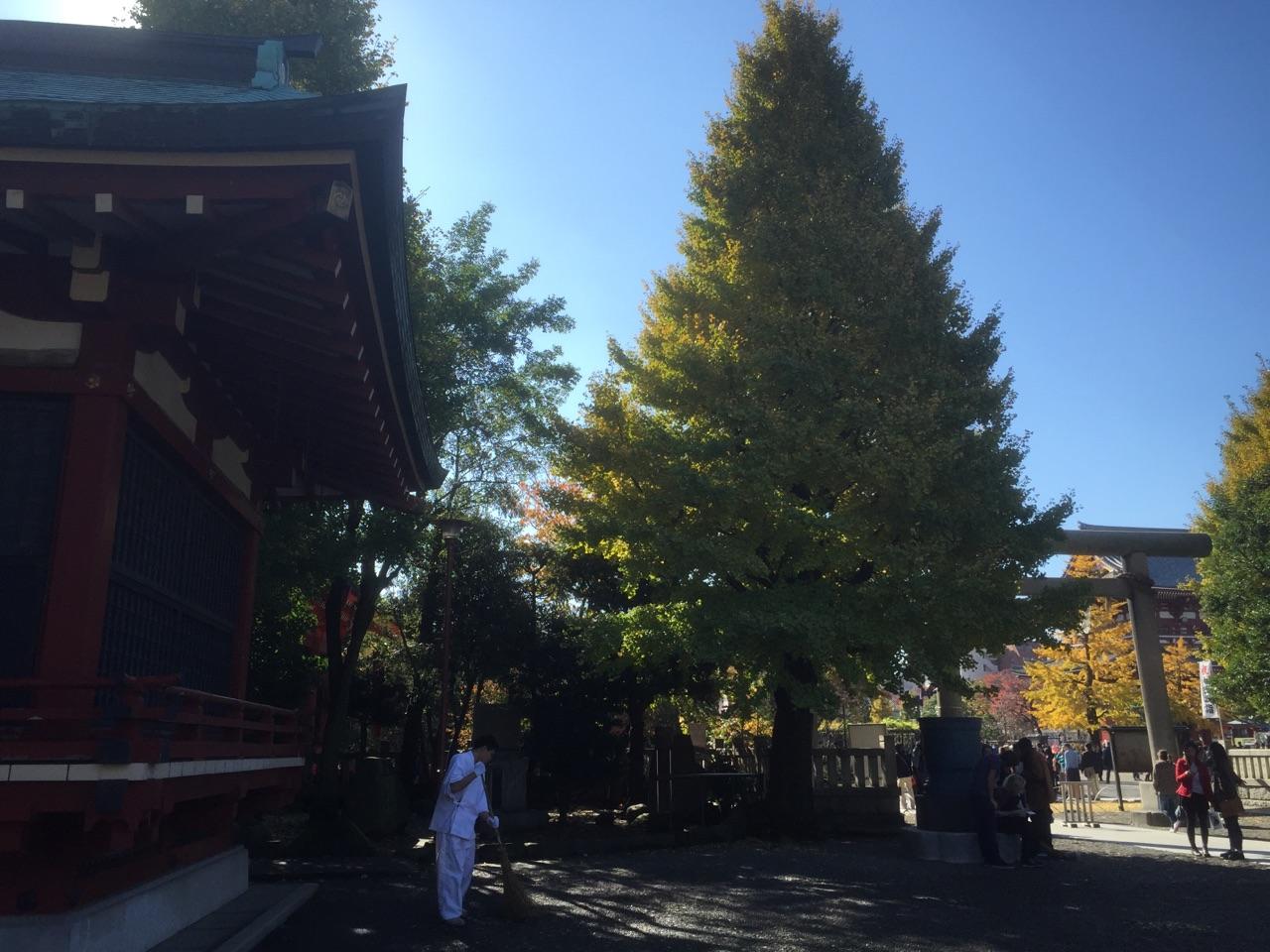 浅草神社 秋
