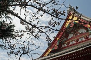 平成28桜2